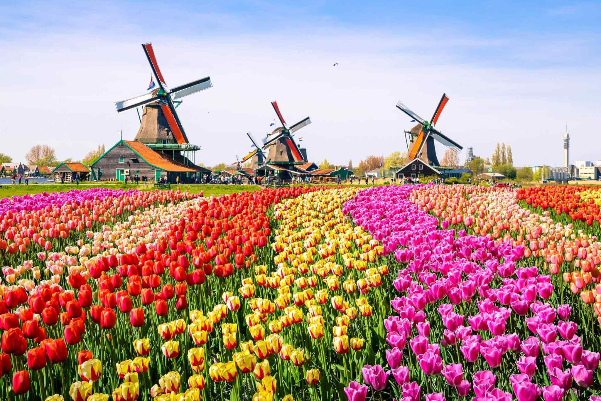 destination-netherlands-01